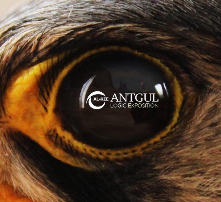 """""""Logic exposition"""": fuori il nuovo Ep di Antgul"""